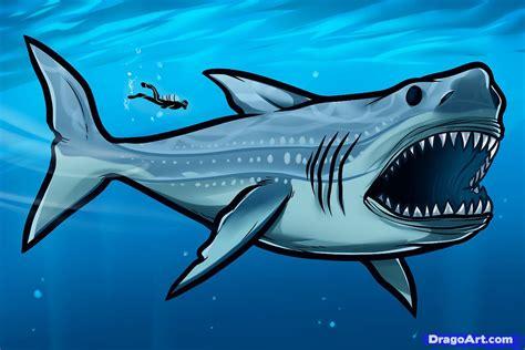 draw megalodon megalodon shark step  step