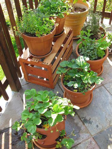 indoor vegetable garden 3 ways how to start indoor vegetable garden for beginners