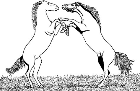fighting stallions clipart clipart picture
