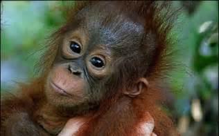 Small Monkeys as Pets