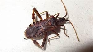 Insecte De Maison : insecte xylophage maison ventana blog ~ Melissatoandfro.com Idées de Décoration