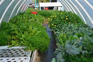 Commercial Aquaponics Systems Plans : Aquaponics Within