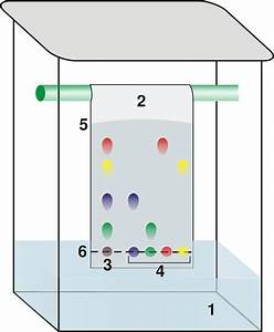 Paper Chromatography Definition  Principles  Procedure And