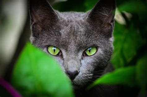 Green Animal Wallpaper - leaves animals cat green wallpapers hd