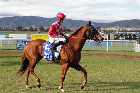 racehorses australian roar theroar