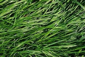 Healthy Green  Green