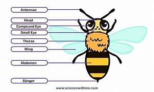 Honey Bee Educational Quotes  Quotesgram
