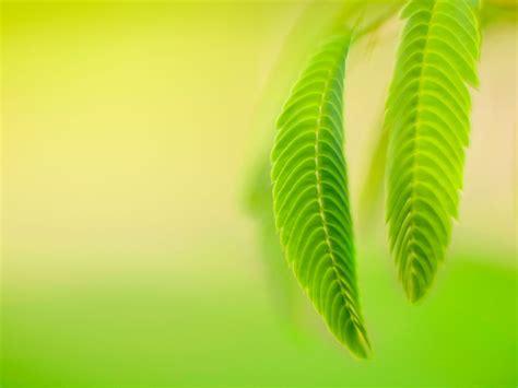 hojas verdes windows   previsualizacion fondo de