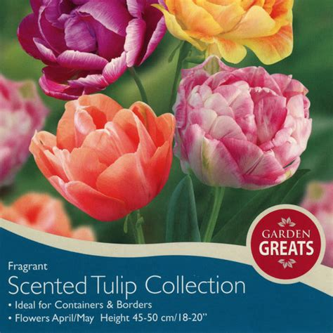 bulbs scented tulip collection bulbs for sale mail order