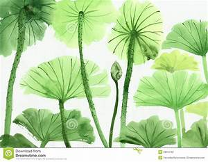 Watercolor Painting Of Green Lotus Leaves Stock ...