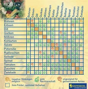 Wann Welches Gemüse Pflanzen Tabelle : blatt und stielgem se im stillen frieden e v startseite ~ Frokenaadalensverden.com Haus und Dekorationen
