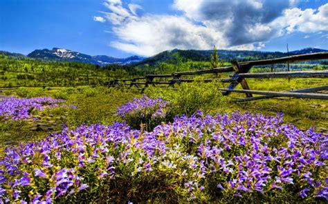 Mountain Wildflowers Desktop Background Wallpaper