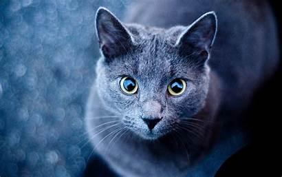 Cats Warrior Wallpapertag Ipad Laptop Desktop Wallpapers