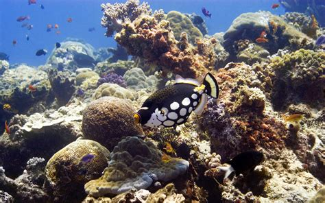 Marine Animal Wallpaper - best wallpapers collection best wallpapers