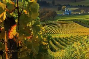Oregon Wine Willamette Valley Wineries