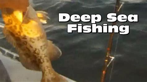 sea deep fishing florida bass grouper clearwater