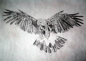 Hawk Drawing by Robert Lance