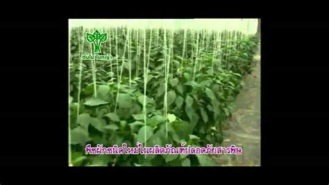 การปลูกพืชผักในโรงเรือน - YouTube