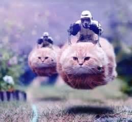 wars cats wars cat meme slapcaption hmmm