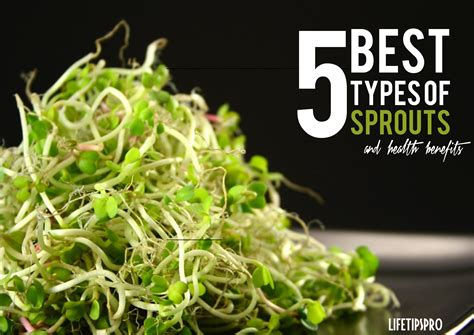 5 Best Types Of Sprouts And Their {amazing} Health