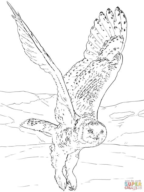 snowy owl coloring page  printable coloring pages