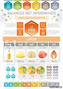 Fat Lipids Diet Infographic Diagram Poster  Water Protein