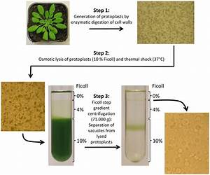 Frontiers | Current Progress in Tonoplast Proteomics ...