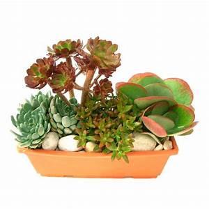 Plantes Grasses Extérieur : plante fleurie d exterieur plantes fleuries d 39 ~ Dallasstarsshop.com Idées de Décoration