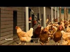 Wie Viel Waschpulver : wie viel bio ist im ei unterschied freilandhaltung bio eier aus den niederlanden youtube ~ Watch28wear.com Haus und Dekorationen