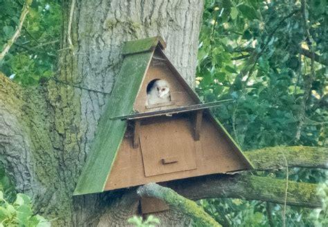 barn owl nest box     kingfisher   reed