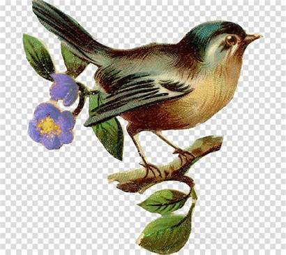 Bird Birds Illustration Clip Wren Illustrations Clipart