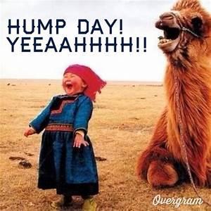 Hump Day Quotes – WeNeedFun