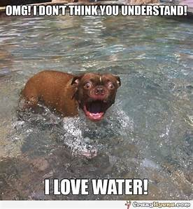 The water loving dog