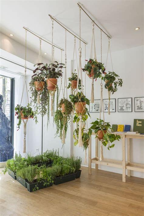 18 curtain rod indoor hanging plants pixshark com images