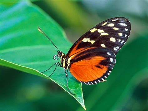 butterfly wallpapers desktop snipping world