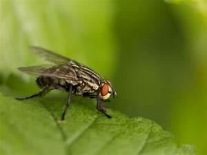 Comment Chasser Les Mouches : 5 astuces utiles pour chasser les mouches dans les plantes ~ Melissatoandfro.com Idées de Décoration