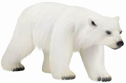 Polar Bear Clip Clipart Animals Painted Cartoon