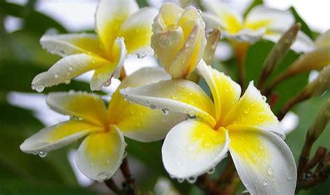 tanaman hias  contoh tanaman hias bunga  cocok