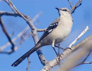 Northeast Texas Birds