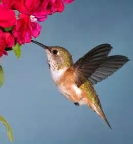 humming bird food humming bird food