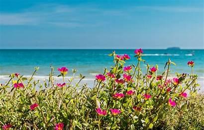 Flowers Sea Beach Summer Sun Wallpapers Shore