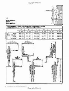 Amazon Com  Human Dimension  U0026 Interior Space  A Source