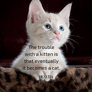Funny kittens and cats quotes with adorable photos
