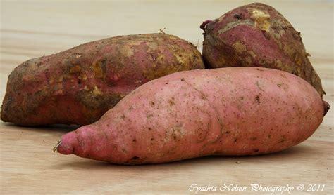 sweet potatoe the old vegan in the sun caribbean vegan recipes page 2
