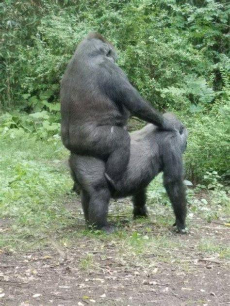 funny animals  pics izismilecom