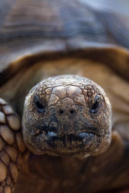 Turtles and Tortoises Animals