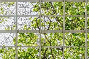 Kupfersulfat Gegen Efeu : gitter und efeu gegen blauen himmel stockfoto colourbox ~ Yasmunasinghe.com Haus und Dekorationen