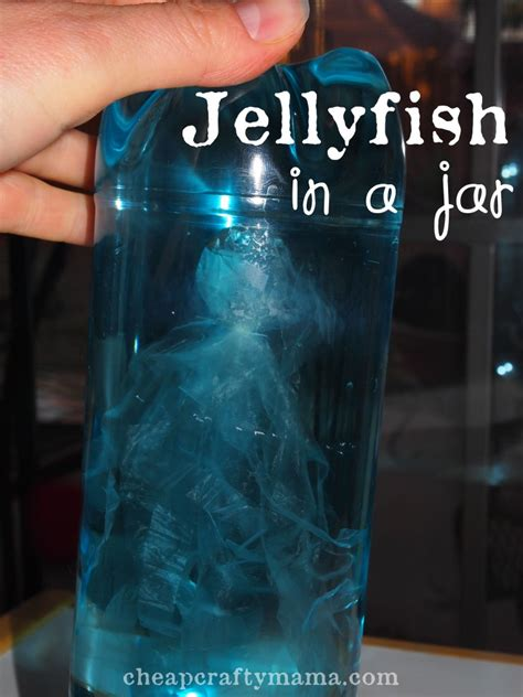 theme for preschool 639 | jellyfish