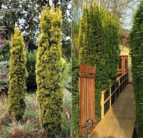 Pflanzen Sichtschutz Im Garten by Welche Pflanzen Sichtschutz Ga Hohe Pflanzen Als