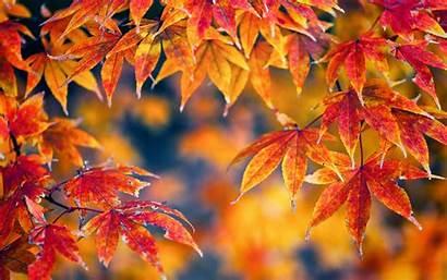 Leaves Autumn Fall Trees Nature Macro Seasons